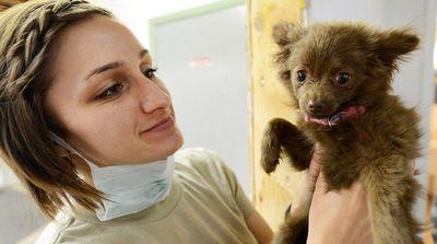 Бесплатный прививочный пункт для животных откроется наМурановской